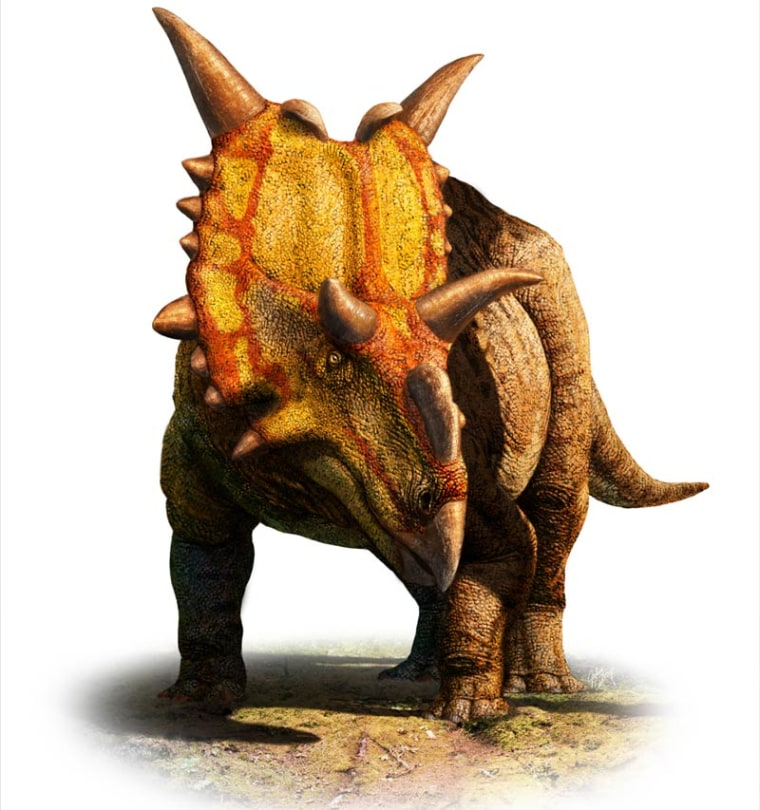 """Xenoceratops (meaning """"alien horned-face"""") had massive spikes at the top of its head, two hooks jutting from its forehead and a ruffled shield around its neck."""
