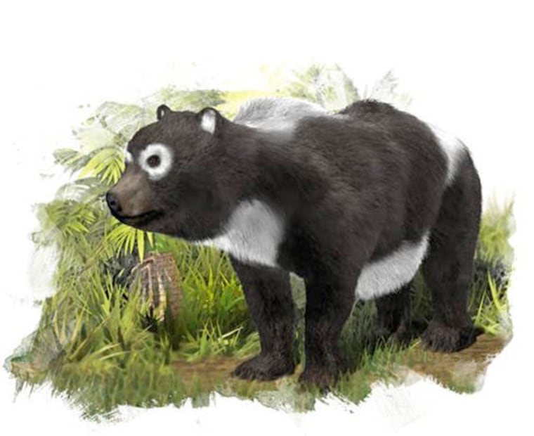 The oldest known ancestor of the giant panda lineage (Ailuropoda melanoleuca) lived about 11.6 million years ago in what is now Spain.
