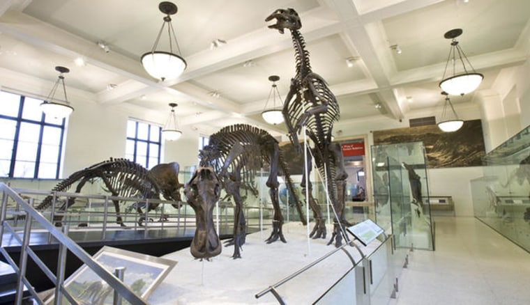 One of two halls in the David H. Koch Dinosaur Wing at the American Museum of Natural History, the Hall of Ornithischian Dinosaurs,features fossils from one of the two major groups of dinosaurs.