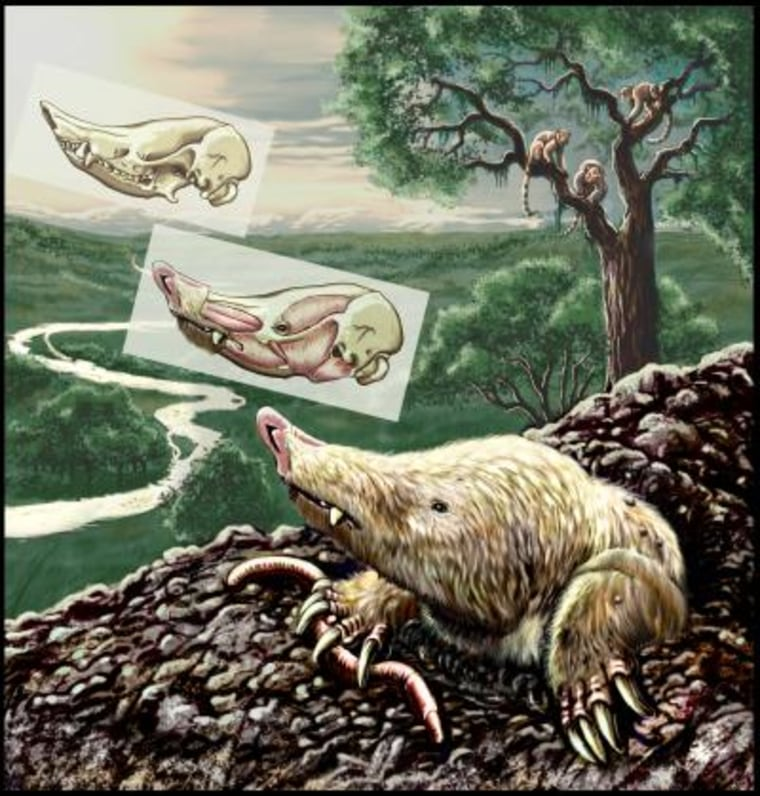 The Miocene mammal Necrolestes patagonensis ventures out of its burrow 16 million years ago in Patagonia, present-day Argentina. Necrolestes is now recognized as a member of a group long thought to have become extinct shortly after the extinction of the large dinosaurs at the end of the Cretaceous period.