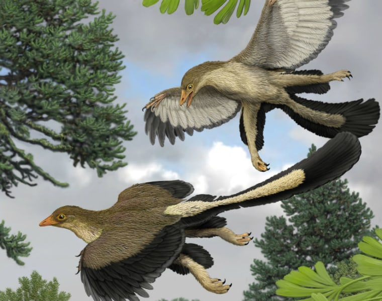 """Archaeopteryx, illustrated here, had multiple layers of long flight feathers. """"Where dinosaurs end and birds begin is a bit arbitrary,"""" one expert explained."""