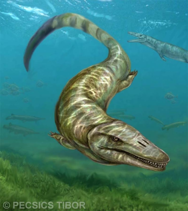 Image: Illustration of a mosasaur species
