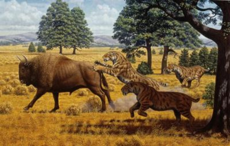 Image: Sabertoothed cats illustration