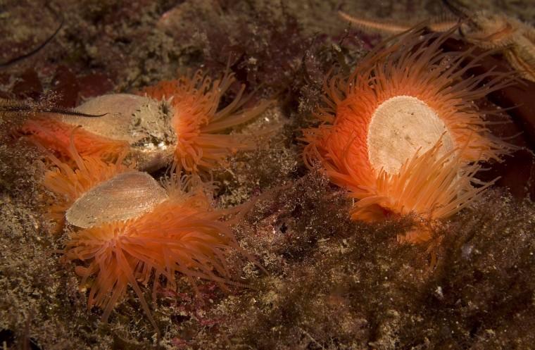 Image: Flame shells