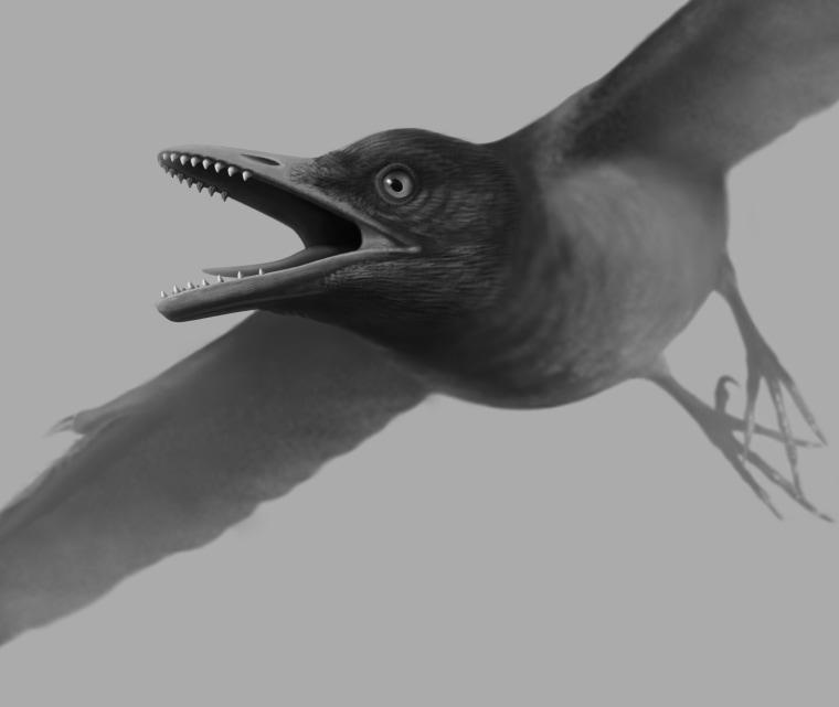 Image: Drawing of Cretaceous Era toothed bird