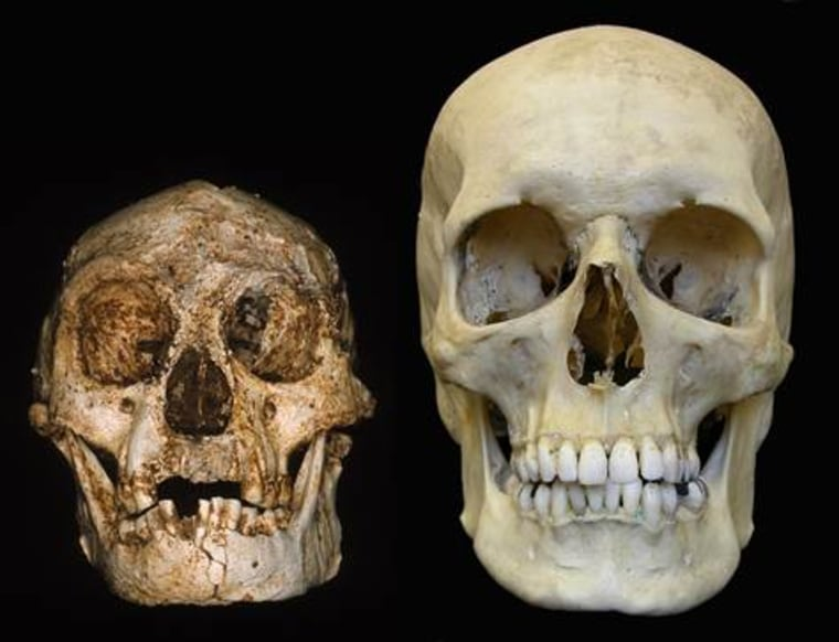 A skull from the Flores site, left,sits alongside a modern human skull.