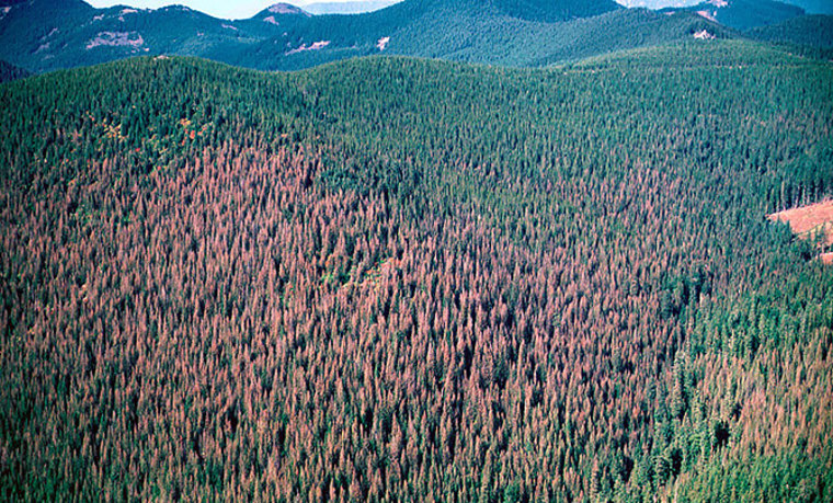 This aerial photograph shows awestern spruce budworm outbreak at Mount Hood National Forest, Oregon.