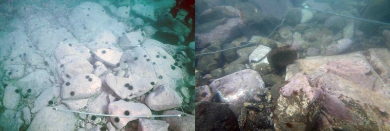 Image: Underwater photographs of a rocky shore area in northeastern Japan.