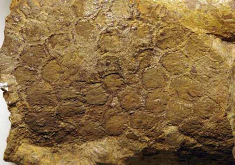 Image: Dinosaur skin