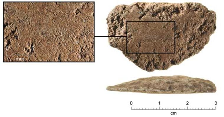 A fragment of 35,000-year-old ground-edge ax from Nawarla Gabarnmang, Jawoyn country, Arnhem Land, Australia.