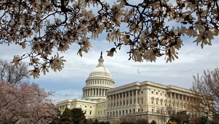 Image: Cherry Blossoms Bloom In Washington DC
