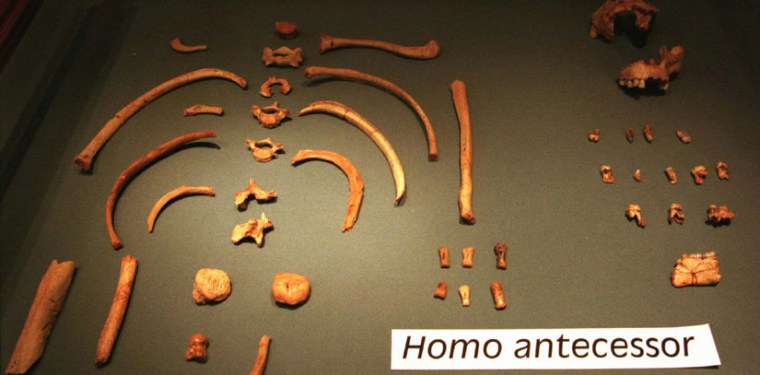 Homo antecessor was the last common ancestor between the African lineage that gave rise to our species and Neanderthals.