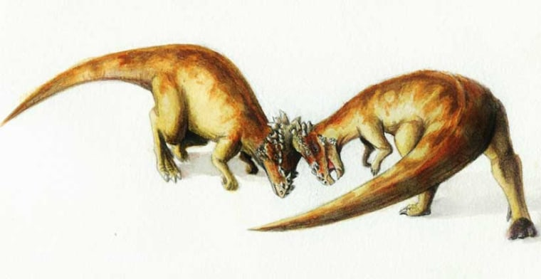 A bison-like head-shoving between two Pachycephalosaurus dinos.