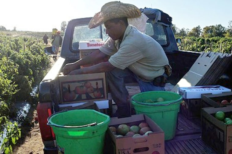 Image: A skeleton crew harvests tomatoes at the Jenkins farm