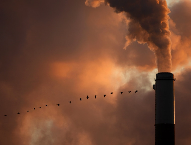 Image: a flock of geese fly past a smokestack