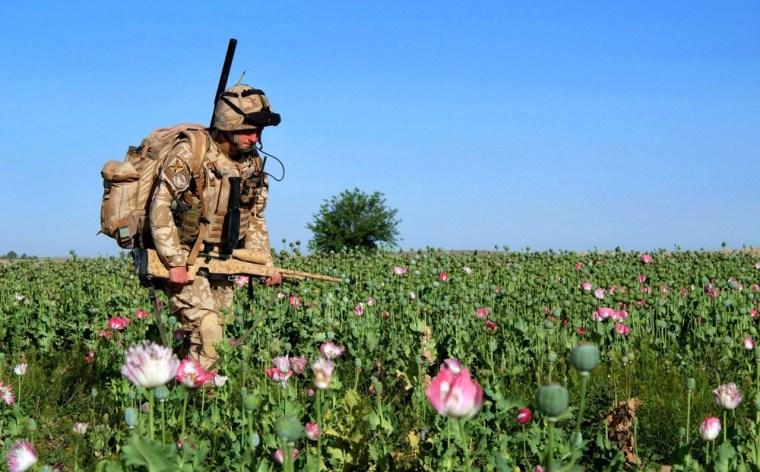 Image: sniper moves through poppy field