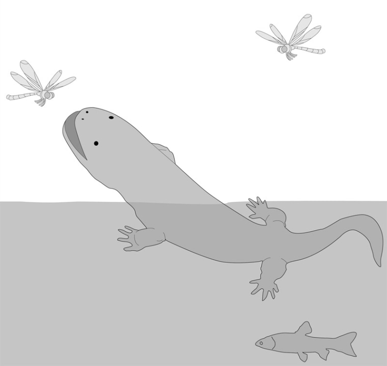 An artist's conception of the giant salamander ancestor (Aviturus exsecratus) that lived about 56 million years ago.
