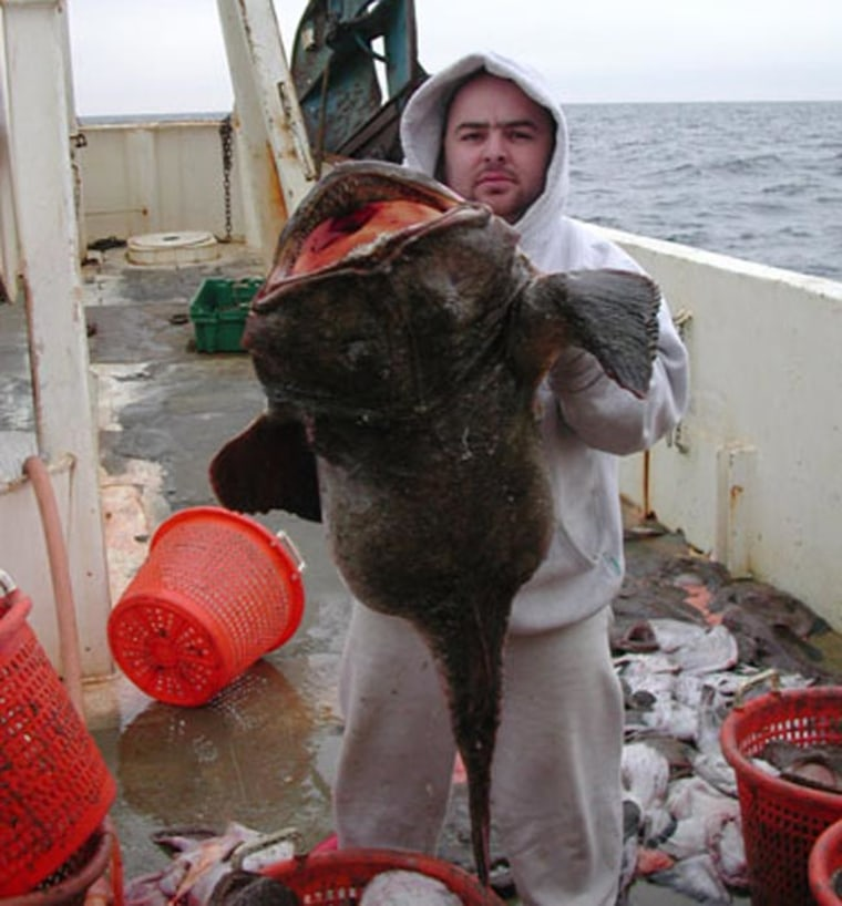 Captain Henrique Franco, a fisherman, holds a female monkfish dubbed Hanibella because her stomach contained two smaller monkfish. The fish was caught during a previous survey in 2001.