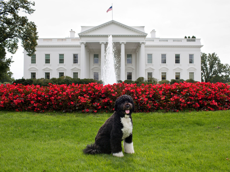 Bo, the Obama family dog, poses for a photo on the North Lawn of the White House, Sept. 28, 2012.  This official White House photograph is being made available only for publication by news organizations and/or for personal use printing by the subject(s) of the photograph. The photograph may not be manipulated in any way and may not be used in commercial or political materials, advertisements, emails, products, promotions that in any way suggests approval or endorsement of the President, the First Family, or the White House.Ê