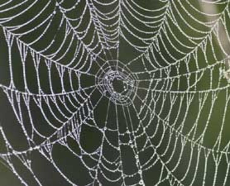 Some spider silk contracts dramatically, up to 50 percent, when it gets wet. Researchers are applying this mechanism to create artificial muscles.