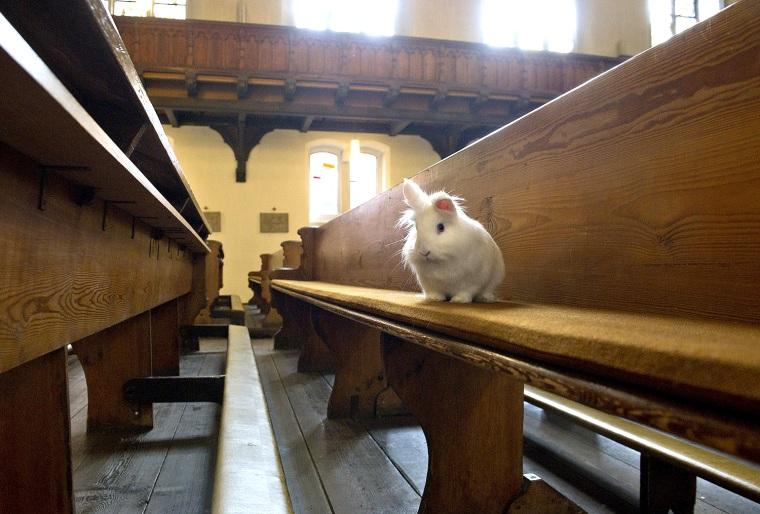 Image: Catholic Church Hosts Mass For House Pets