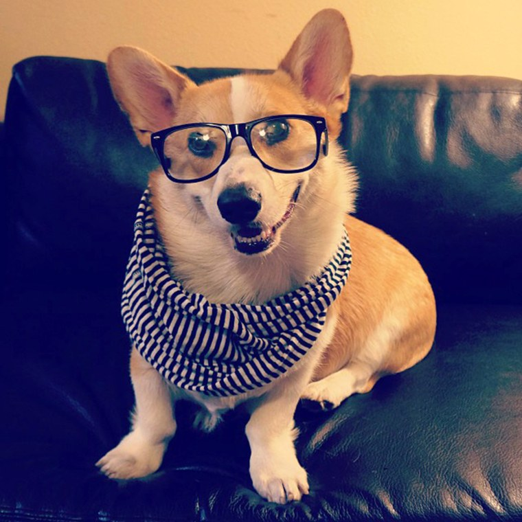 #corgnelius is gonna take it easy tonite, prob just stay in and listen to some Alt-J or Arcade Fire #hipsterlevel1000  http://instagram.com/p/fETdLqJRZp/  Oct. 4, 2013