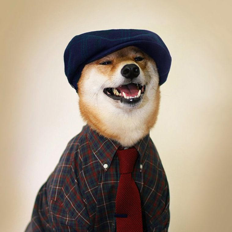 Check Yourself #mensweardog #menswear #dog #checks @stetsonusa @thetiebarFollow  Aug. 20, 2013