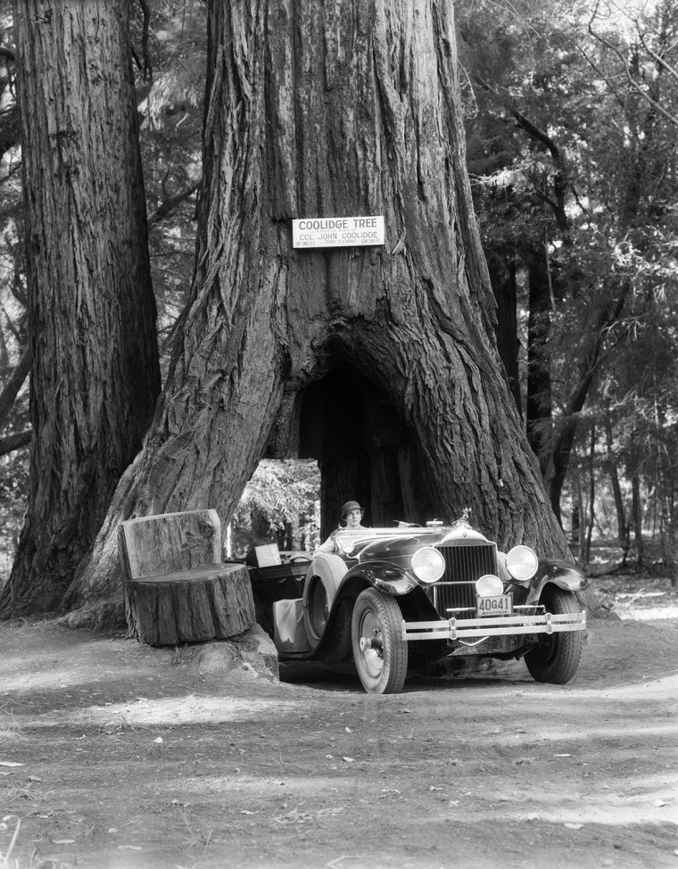 1930s WOMAN DRIVING CONVERTIBLE CAR THROUGH OPENING IN GIANT SEQUOIA TREE TRUNK COOLIDGE TREE MENDOCINO CALIFORNIA (t4650) - H. ARMSTRONG ROBERTS/CLASSICSTOCK/Everett Collection