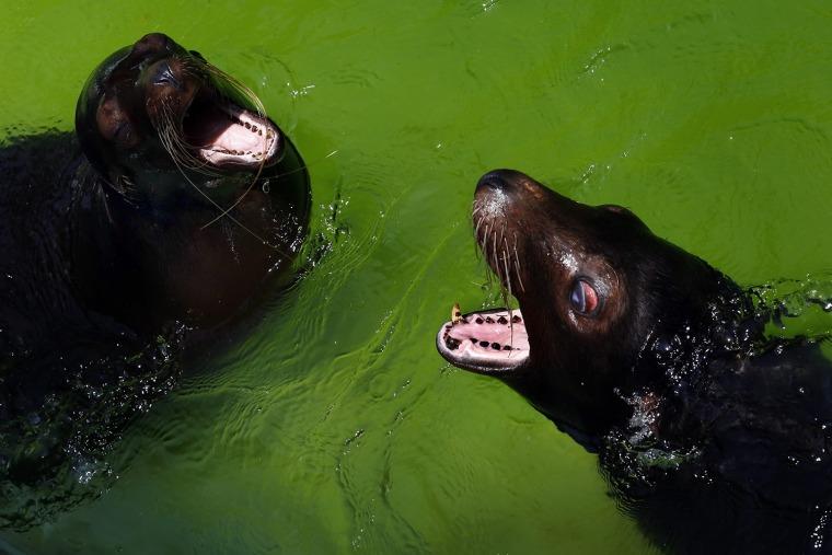 Image: Sri Lanka's National Zoological Gardens