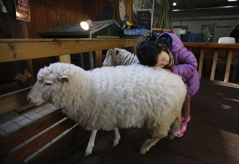 Image: A girl plays with sheep at a sheep cafe in Seoul