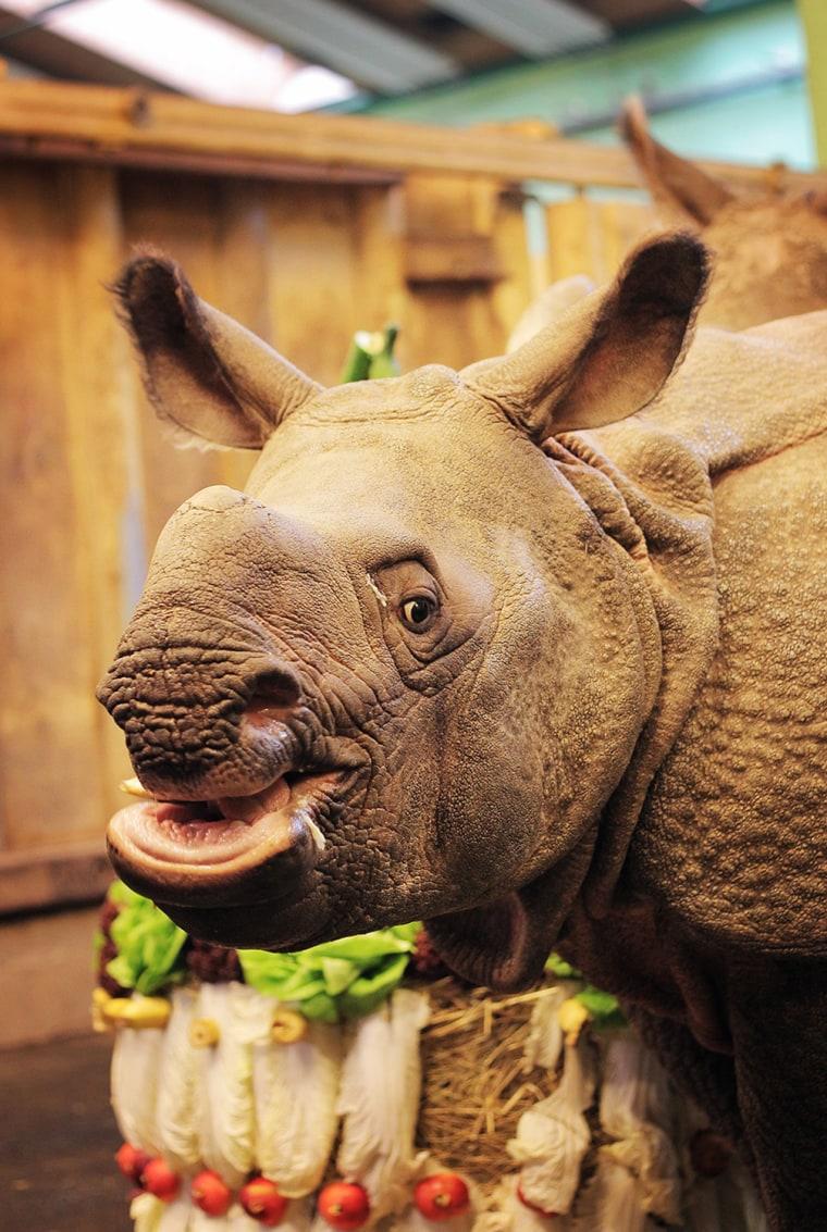 Image: A Rhino Celebrates Her First Birthday