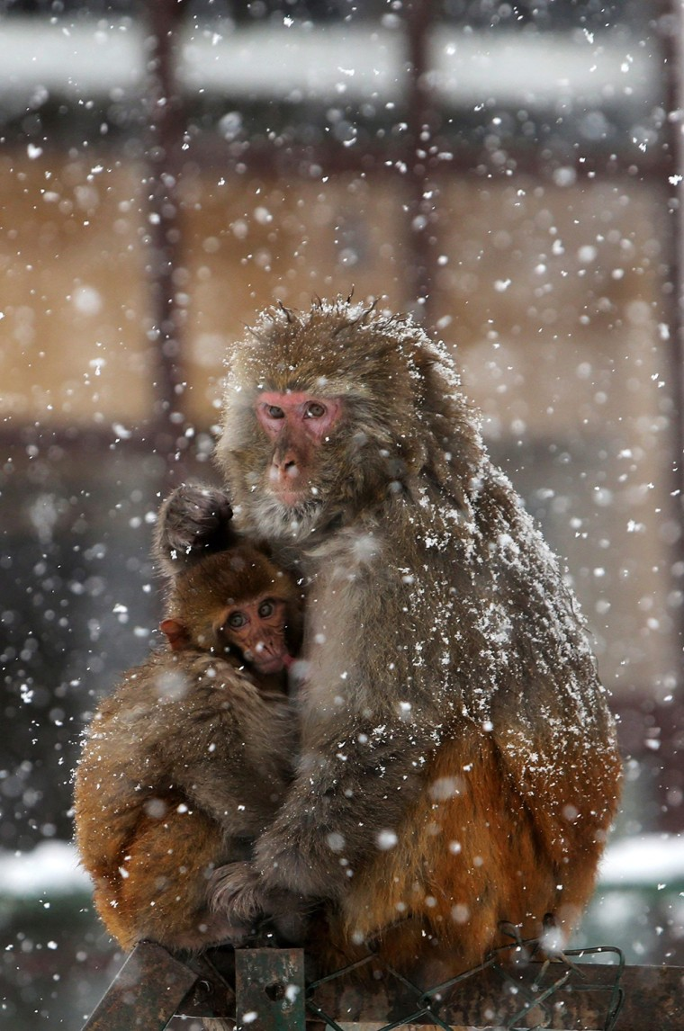 Image: Heavy snows in Kashmir