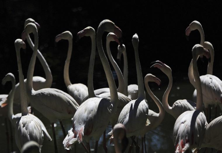 Image: South Africa flamingos