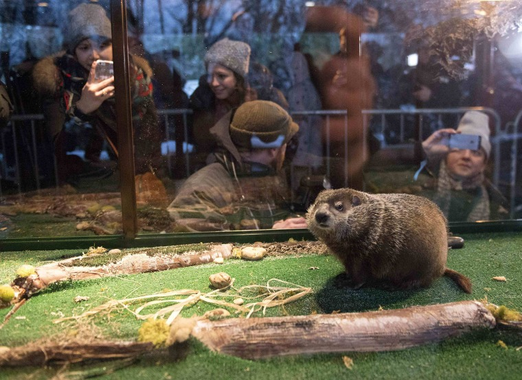Image: Groundhog Staten Island Chuck is seen in his viewing unit, during a Groundhog Day weather prediction event at the Staten Island Zoo in New York
