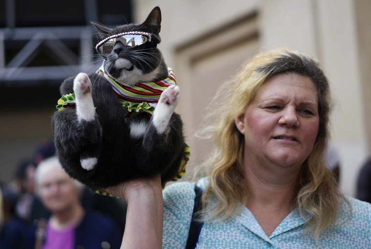 Image: A woman holds up a cat wearing sunglasses as they pose for tourists outside the Dolby Theater in Hollywood