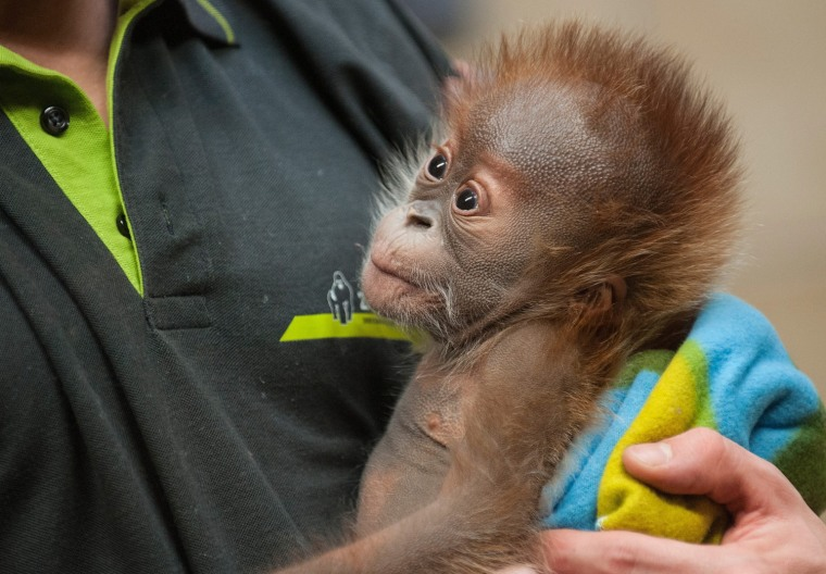 Image: Rieke moves from Berlin zoo in a couple of days