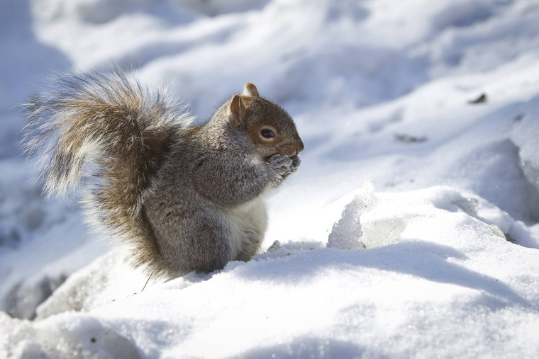 Image: A squirrel eats a nut in Central Park in the Manhattan borough of New York