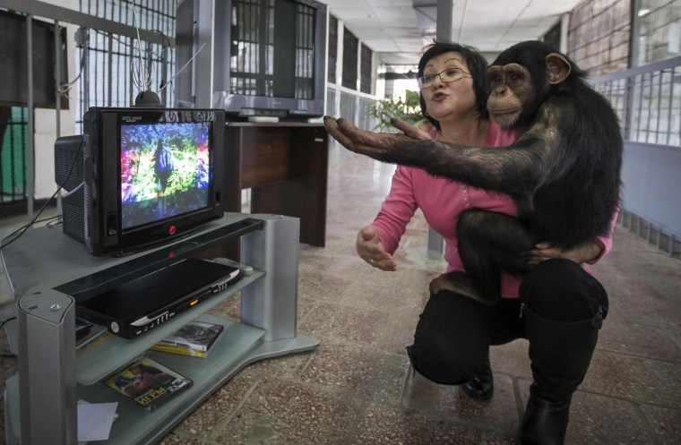 Image: Zoo staff Sholpan Abdibekova and Tomiris, a five-year-old chimpanzee, watch BBC environmental programme in primate winter enclosure in Almaty