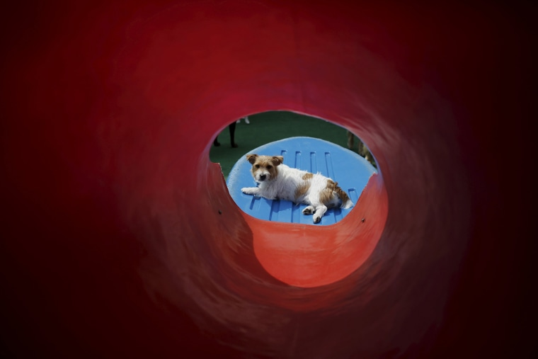 Image: Dog rests at the Dog Resort in Sao Paulo