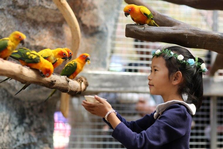 Image: CHINA-ANIMAIL-PARROT