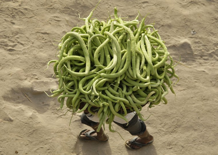 Image: A farmer carries cucumbers from his field to sell in the markets in Allahabad