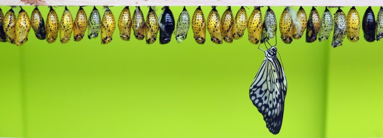 Image: BESTPIX Butterflies Are Released Into The Natural History Museum's Sensational Butterflies Exhibition