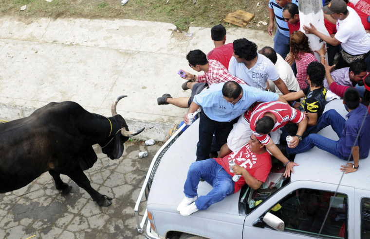 Image: People take refuge on top of a car from a bull during the annual Candlemas celebrations in Tlacotalpan