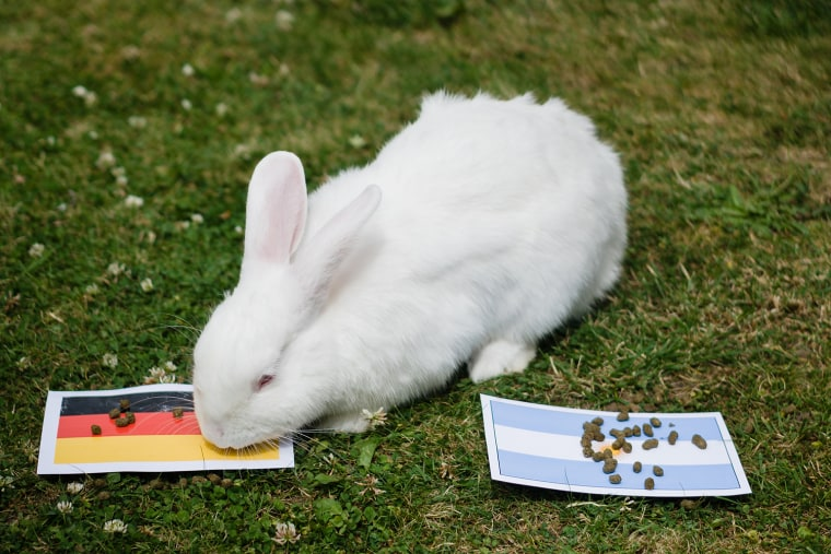 Pet Predictions: World Cup Matches
