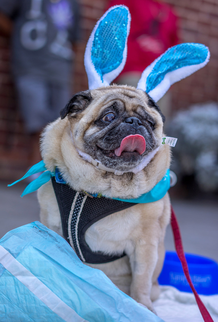 US-HOLY WEEK-EASTER-ANIMAL BLESSING
