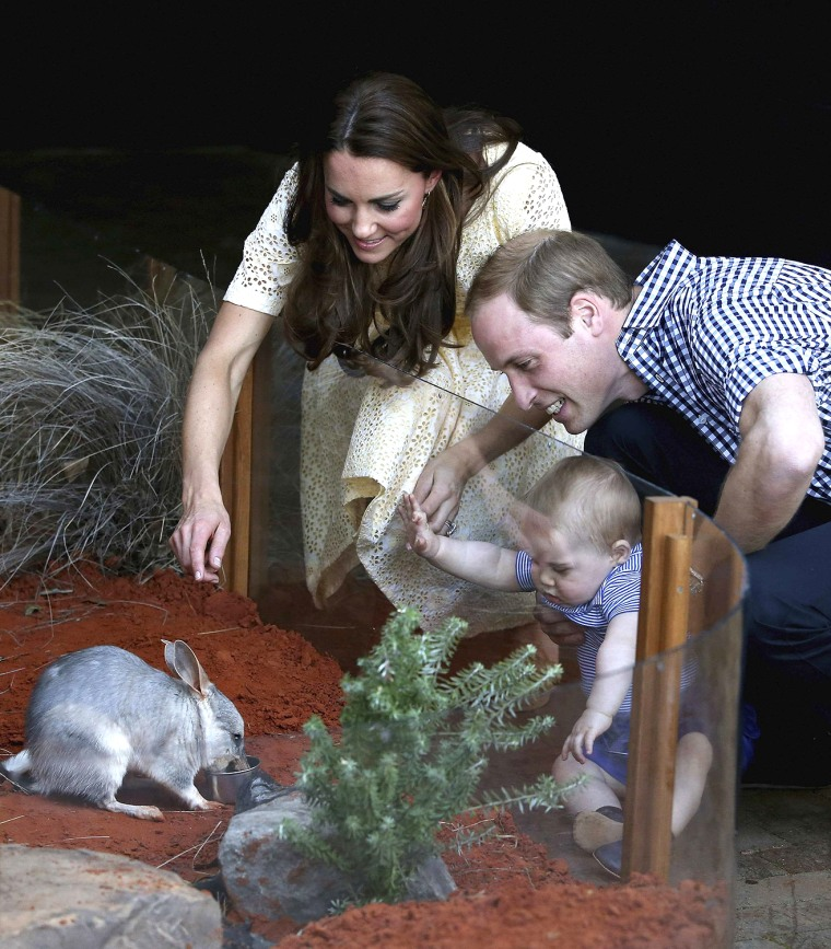 Image: Britain's Prince William and his wife Catherine, the Duchess of Cambridge, watch as their son Prince George looks at a Bilby which has been named after him at Taronga Zoo in Sydney