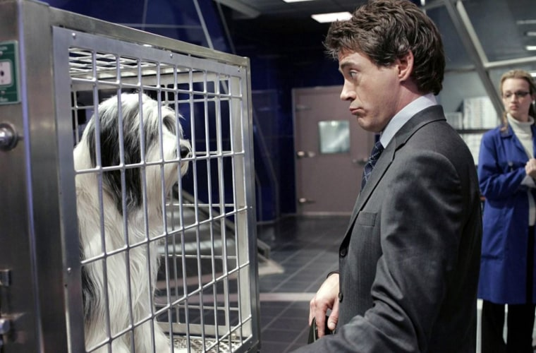 (Left to right) The Shaggy Dog, Robert Downey, Jr., Bess Wohl.  The new version will be based on the storyline from The Shaggy D.A., a sequel to the original 1959 Fred MacMurray comedy. Allen will play a lawyer whose devotion to his career comes at the expense of his family. His transformation into a dog hampers his career, but teaches him to be a better father and husband.