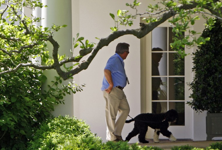 """White House Horticulturist Haney walks U.S. President Obama's dog """"Bo"""" through the Colonnade at the White House in Washington"""
