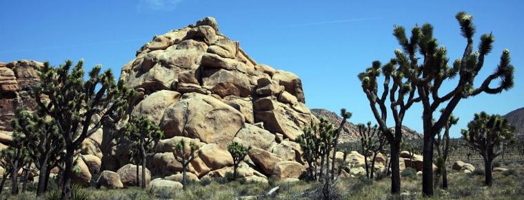 Image: View of the 1,234-square-mile Joshua Tre