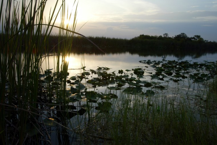 Image: Judge Focus Of Sugar Industry Ire Over Everglades Cleanup
